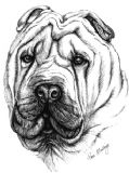 Shar Pei Personalised Greetings Card